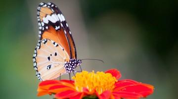 motyl iwona majewska-opiełka droga do siebie